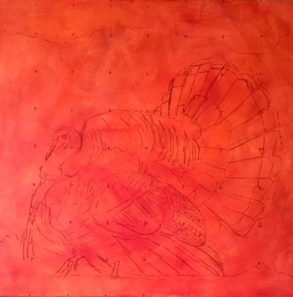 40x40 cadmium red toned canvas POPS. The color will peak through the whole painting, kind of like a glowing backlight. Charcoal sketch, accurate but not precise, sorts the main blocks of the turkey's complex feather patterns.