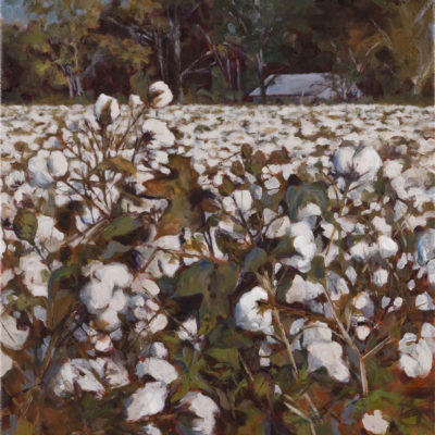 Edge of Cotton
