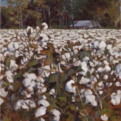 Edge of Cotton